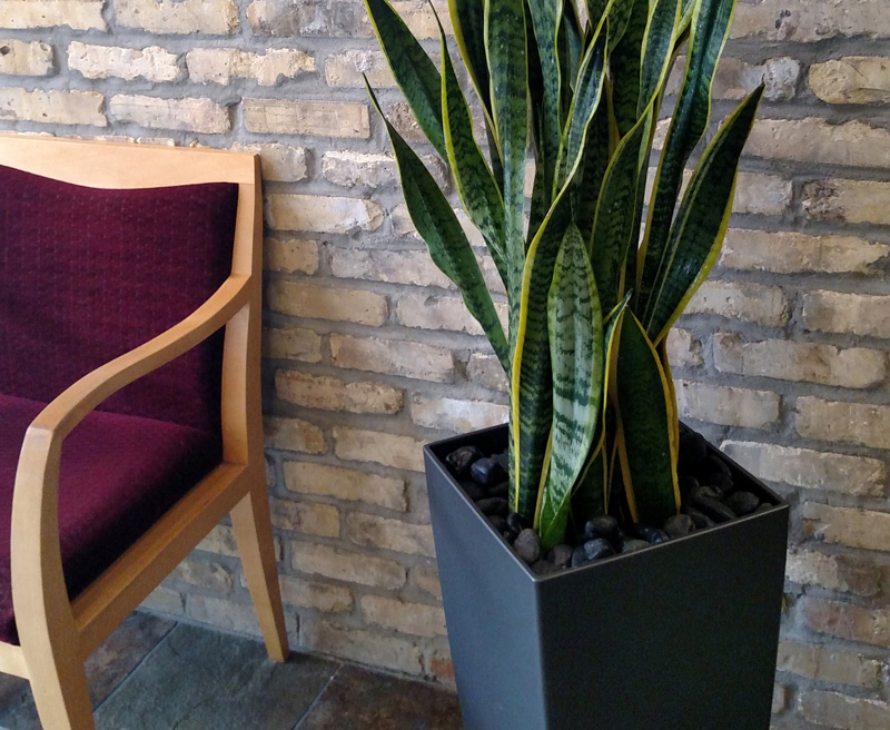 Commercial-Plant-Service-Waukesha-WI
