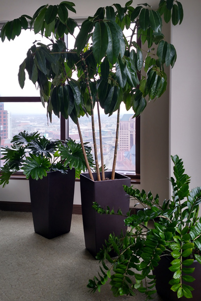 Interior-Plantscapes-Brookfield-WI