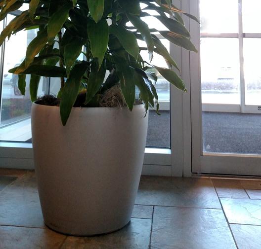 Interior-Plantscapes-Waukesha-WI