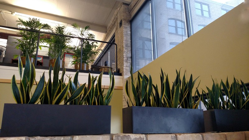 Plant-Design-Milwaukee-WI