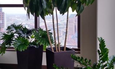 Interior Plant Maintenance